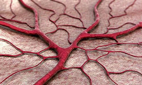 Blood Vessel Networks
